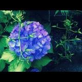 Small_ea9653fcd495
